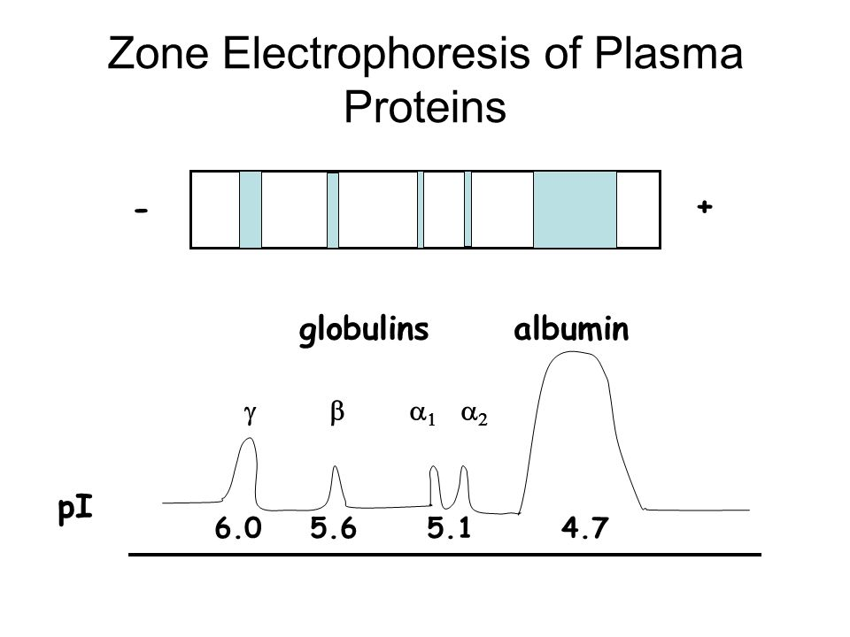 Zone Electrophoresis of Plasma Proteins - + pI 6.05.65.14.7 globulinsalbumin  