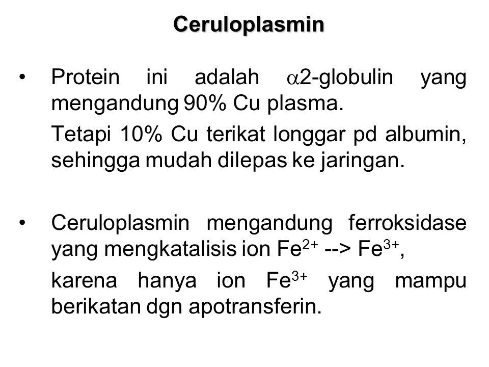 Ceruloplasmin Protein ini adalah  2-globulin yang mengandung 90% Cu plasma. Tetapi 10% Cu terikat longgar pd albumin, sehingga mudah dilepas ke jarin