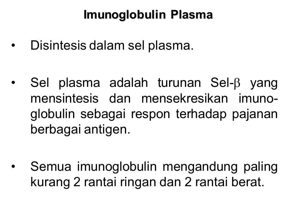 Imunoglobulin Plasma Disintesis dalam sel plasma. Sel plasma adalah turunan Sel-  yang mensintesis dan mensekresikan imuno- globulin sebagai respon t