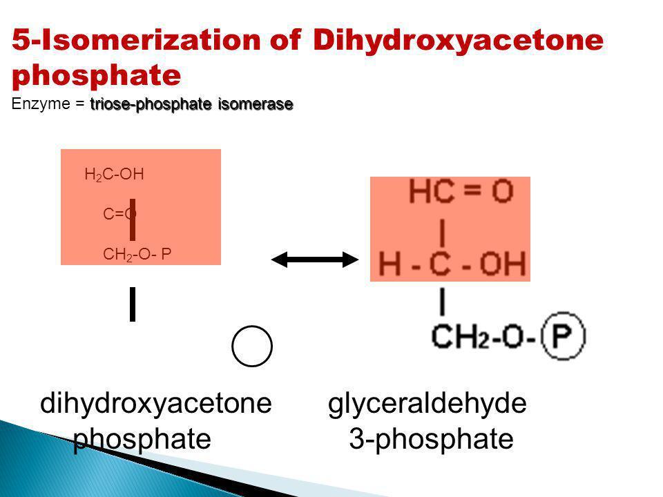 5-Isomerization of Dihydroxyacetone phosphate triose-phosphate isomerase Enzyme = triose-phosphate isomerase H 2 C-OH C=O CH 2 -O- P dihydroxyacetone
