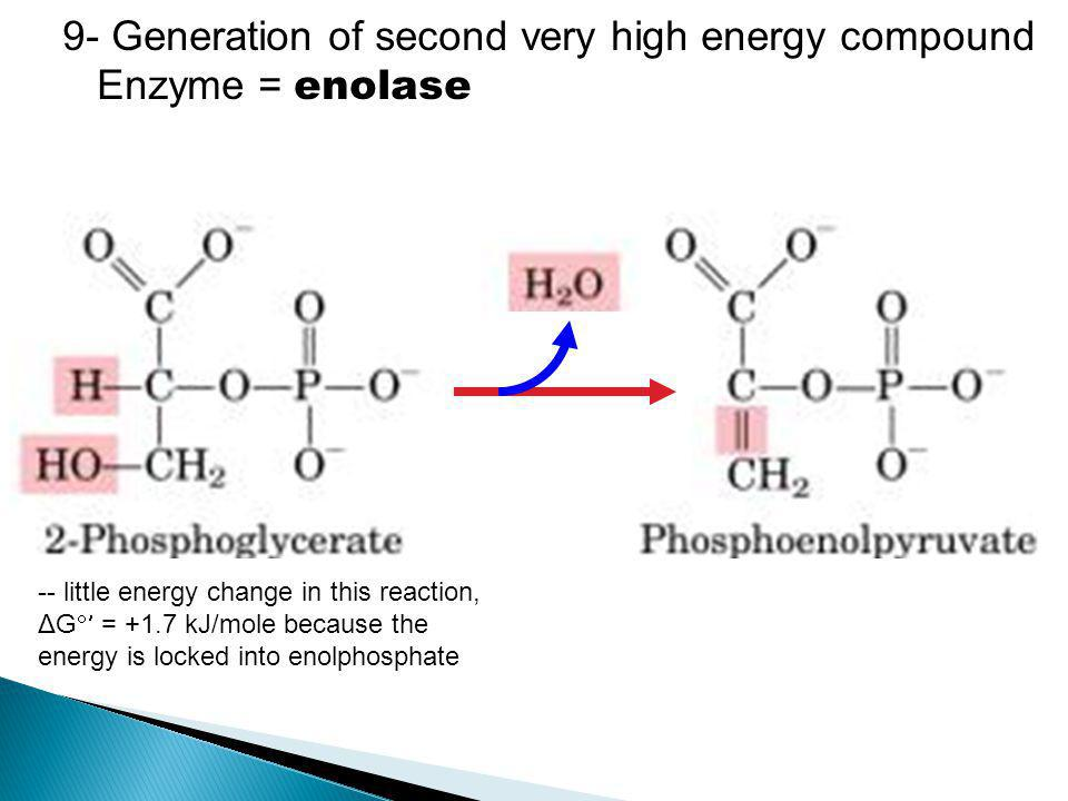 9- Generation of second very high energy compound Enzyme = enolase -- little energy change in this reaction, ΔG  = +1.7 kJ/mole because the energy i
