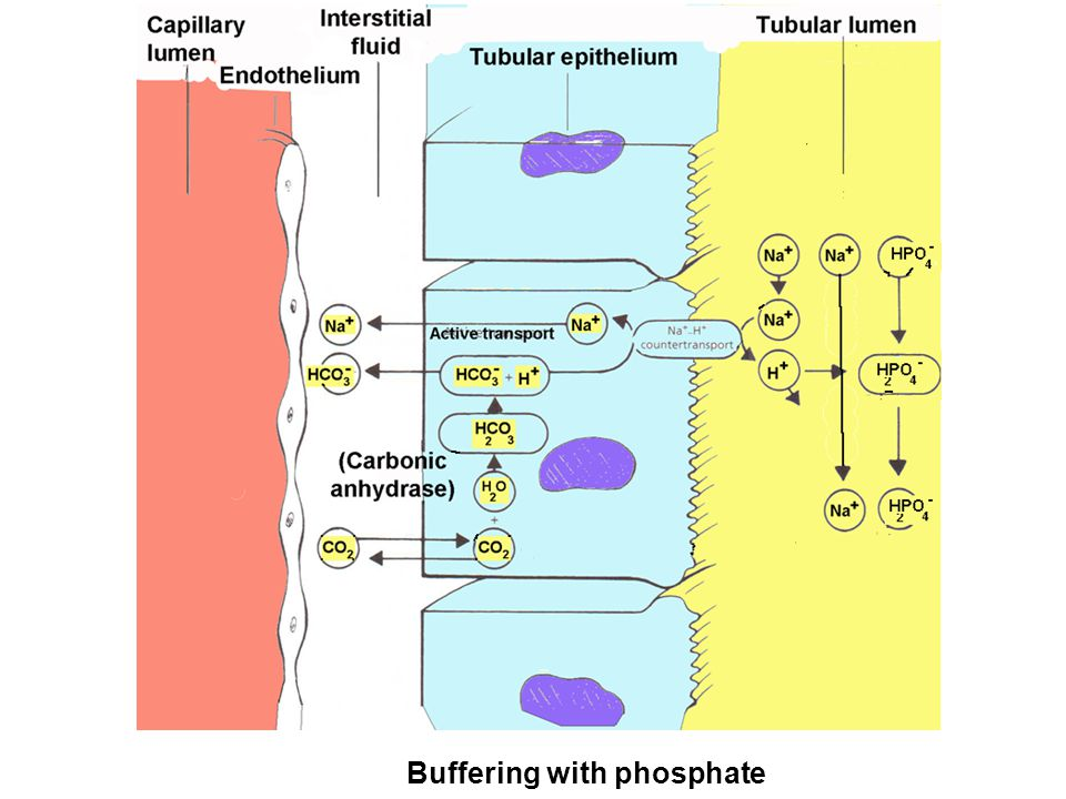 Buffering with phosphate