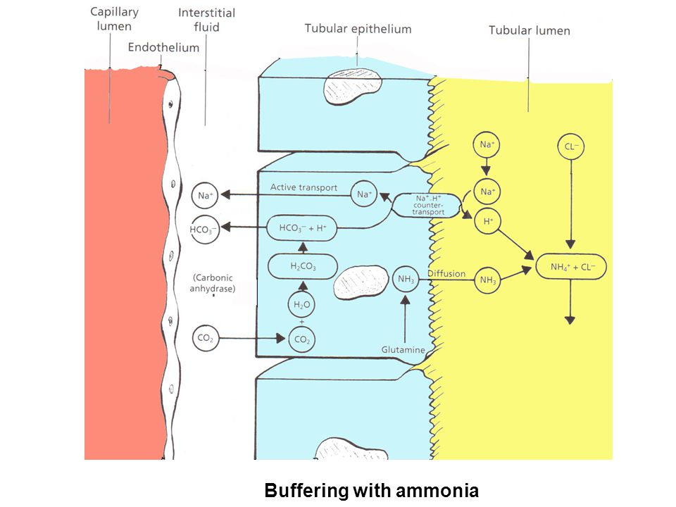 Buffering with ammonia