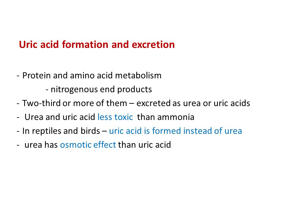 Uric acid formation and excretion -Protein and amino acid metabolism - nitrogenous end products -Two-third or more of them – excreted as urea or uric