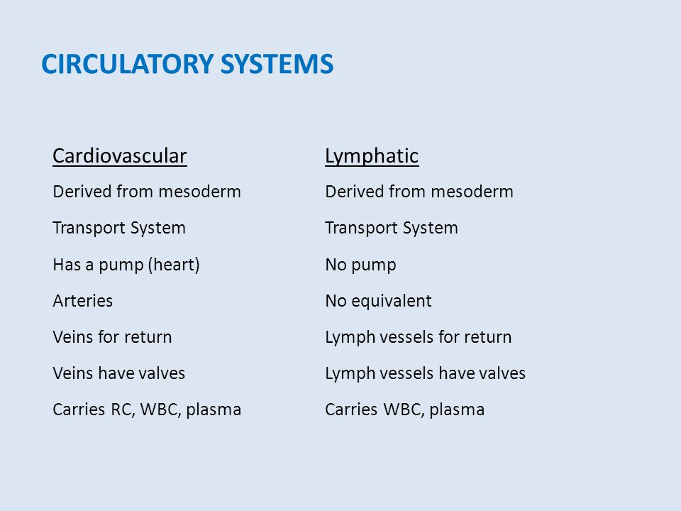 CIRCULATORY SYSTEMS CardiovascularLymphatic Derived from mesodermDerived from mesoderm Transport SystemTransport System Has a pump (heart)No pump Arte