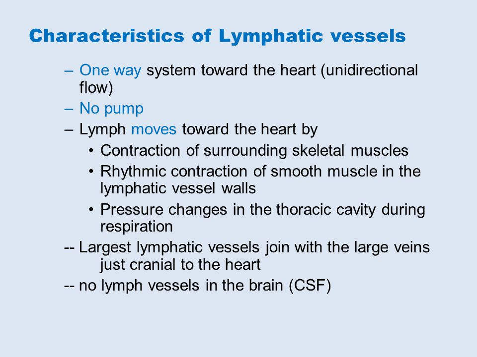 –One way system toward the heart (unidirectional flow) –No pump –Lymph moves toward the heart by Contraction of surrounding skeletal muscles Rhythmic