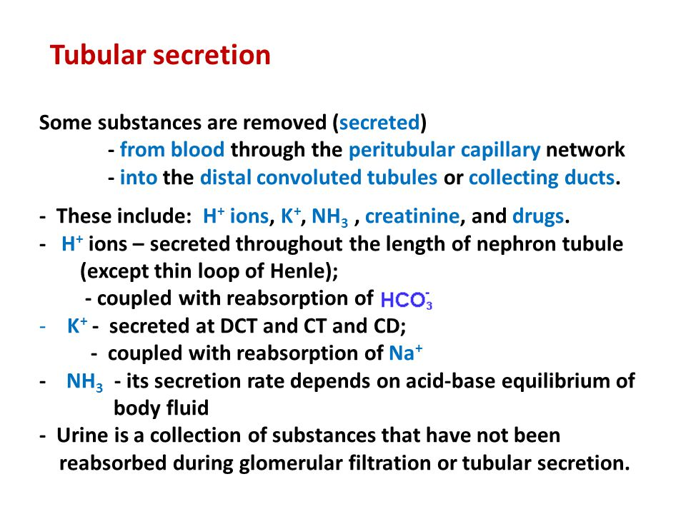 Some substances are removed (secreted) - from blood through the peritubular capillary network - into the distal convoluted tubules or collecting ducts