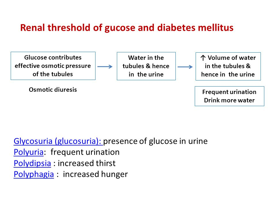 Renal threshold of gucose and diabetes mellitus Glucose contributes effective osmotic pressure of the tubules Water in the tubules & hence in the urin