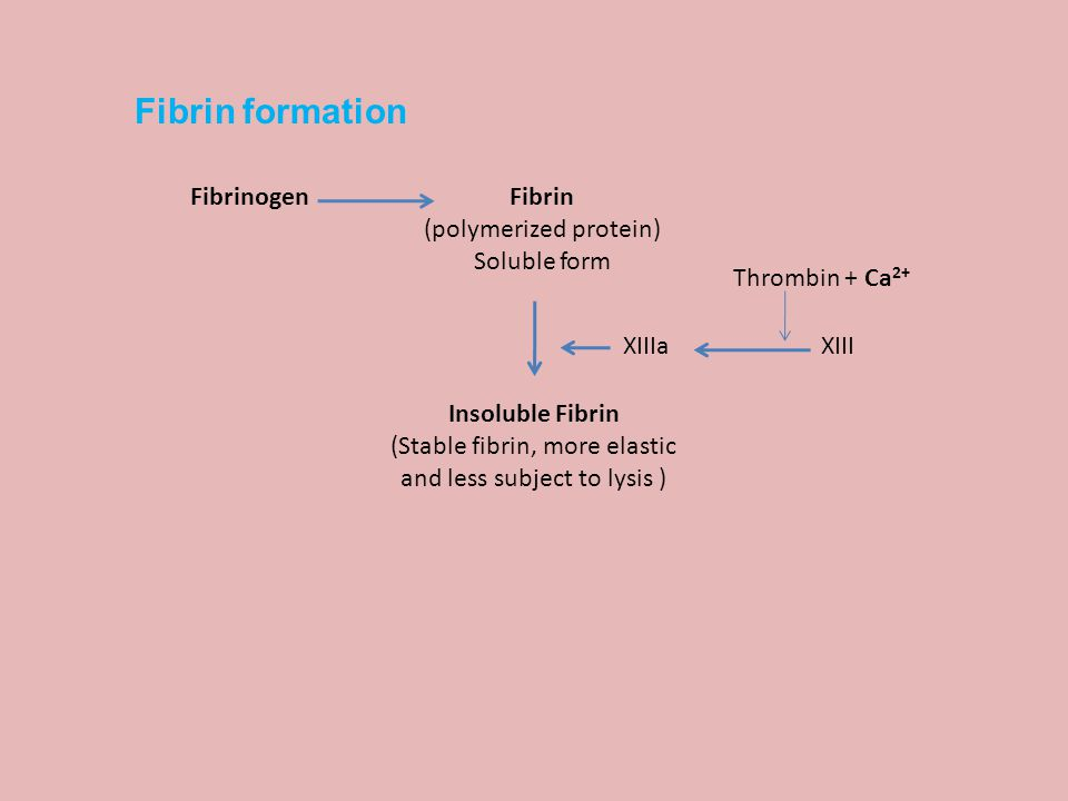 Fibrin (polymerized protein) Soluble form Fibrinogen Thrombin + Ca 2+ XIIIaXIII Insoluble Fibrin (Stable fibrin, more elastic and less subject to lysis ) Fibrin formation