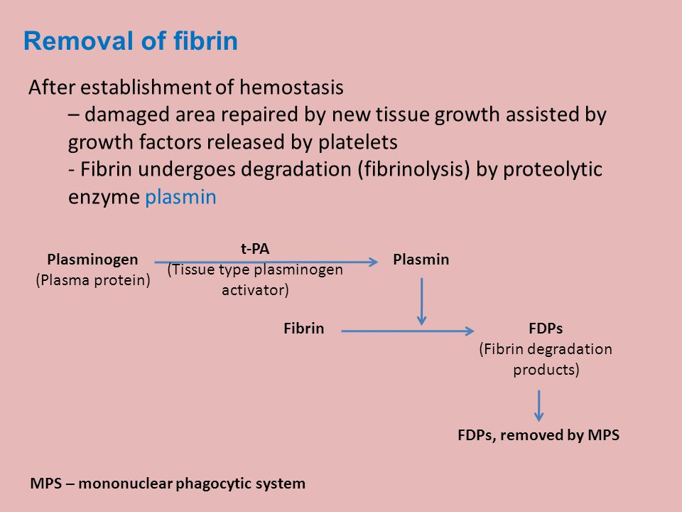 Removal of fibrin After establishment of hemostasis – damaged area repaired by new tissue growth assisted by growth factors released by platelets - Fi
