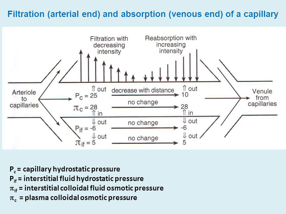 Filtration (arterial end) and absorption (venous end) of a capillary P c = capillary hydrostatic pressure P if = interstitial fluid hydrostatic pressu