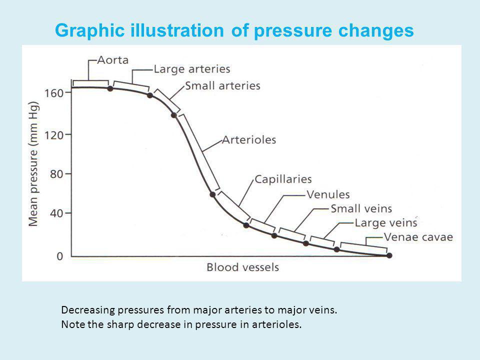 Graphic illustration of pressure changes Decreasing pressures from major arteries to major veins. Note the sharp decrease in pressure in arterioles.