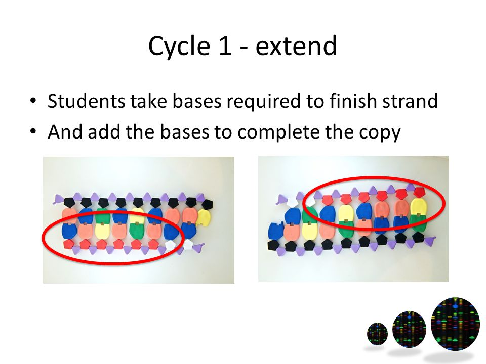 Cycle 1 - extend Students take bases required to finish strand And add the bases to complete the copy