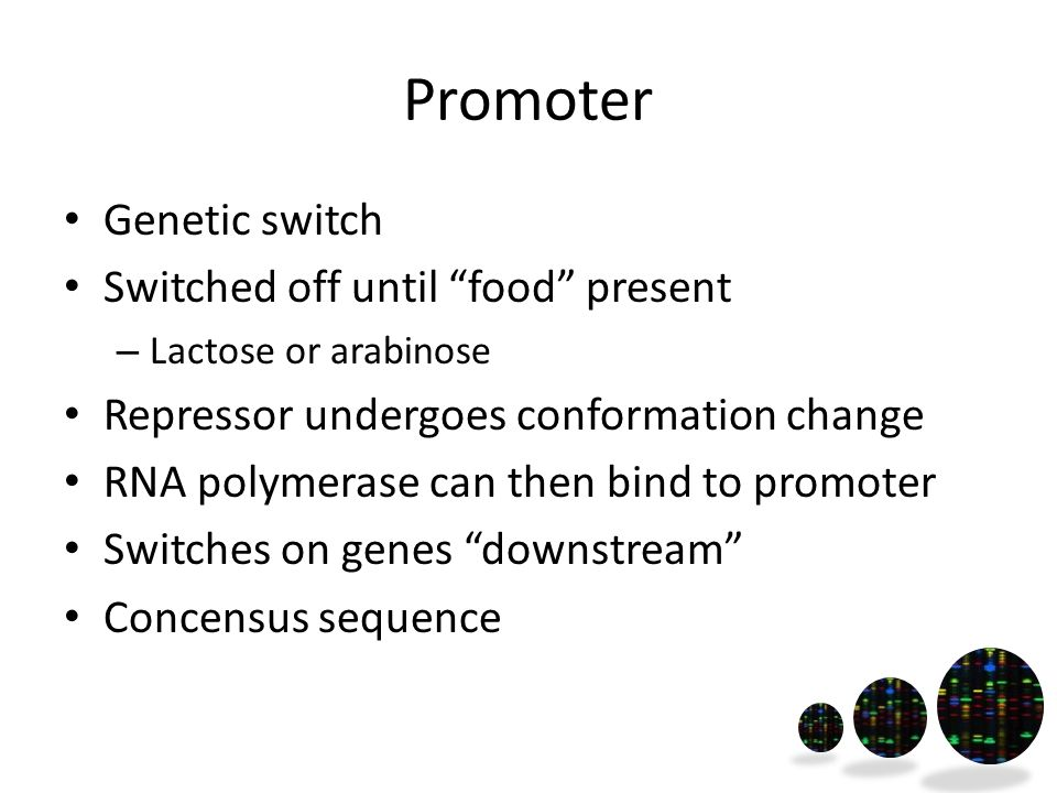 Promoter Genetic switch Switched off until food present – Lactose or arabinose Repressor undergoes conformation change RNA polymerase can then bind to promoter Switches on genes downstream Concensus sequence