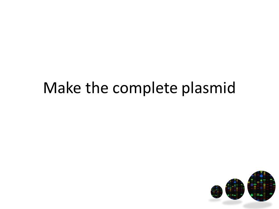 Make the complete plasmid