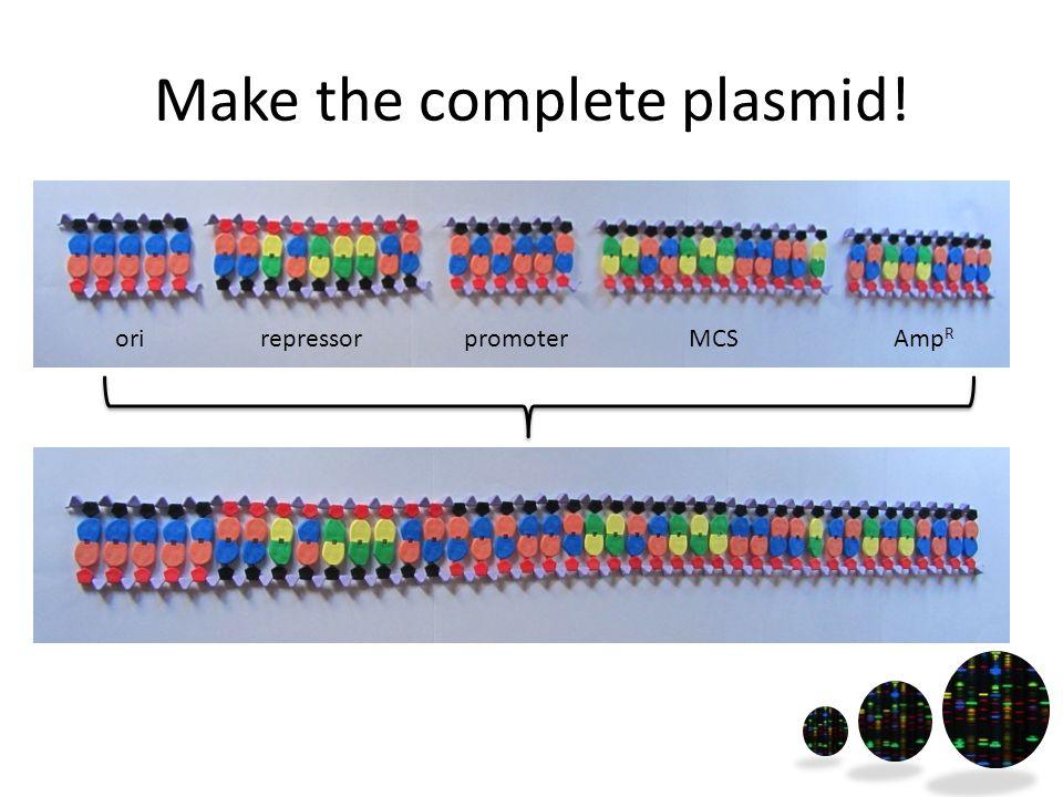 Make the complete plasmid! orirepressorpromoterMCSAmp R