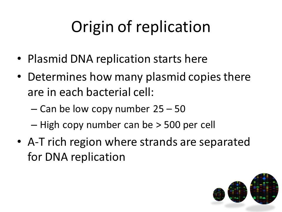 Origin of replication Plasmid DNA replication starts here Determines how many plasmid copies there are in each bacterial cell: – Can be low copy number 25 – 50 – High copy number can be > 500 per cell A-T rich region where strands are separated for DNA replication