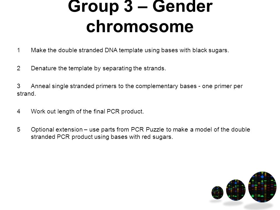 Group 3 – Gender chromosome 1Make the double stranded DNA template using bases with black sugars.