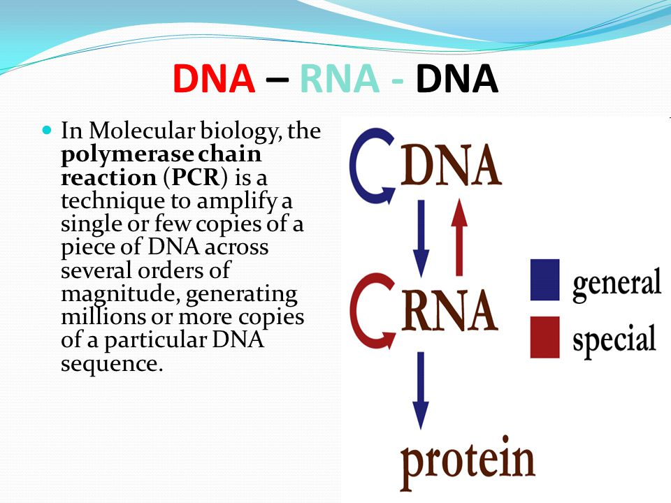 DNA – RNA - DNA In Molecular biology, the polymerase chain reaction (PCR) is a technique to amplify a single or few copies of a piece of DNA across se