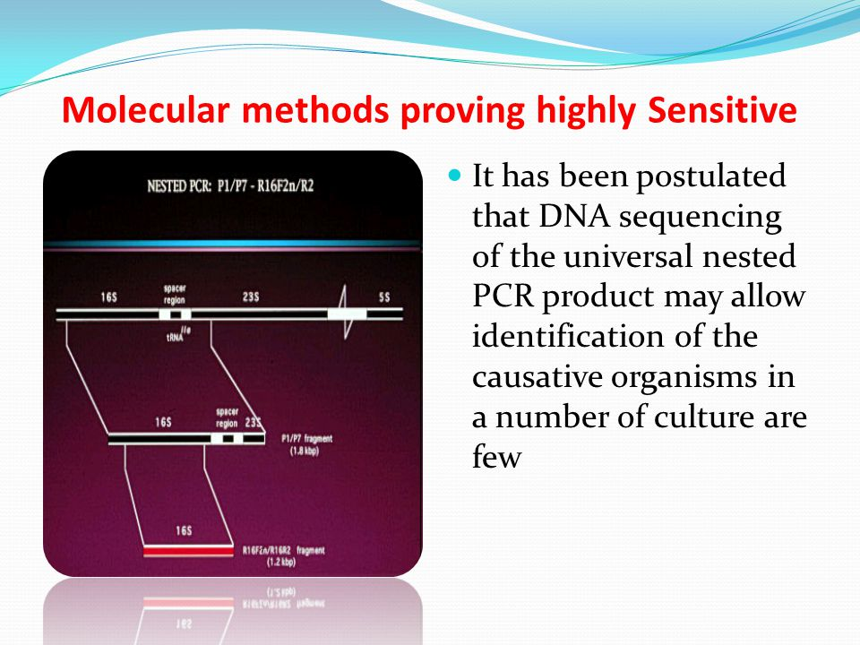 Molecular methods proving highly Sensitive It has been postulated that DNA sequencing of the universal nested PCR product may allow identification of