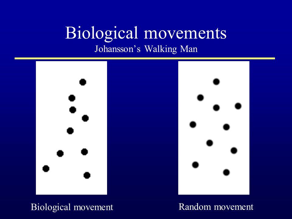 Biological movements Johansson's Walking Man Random movement Biological movement