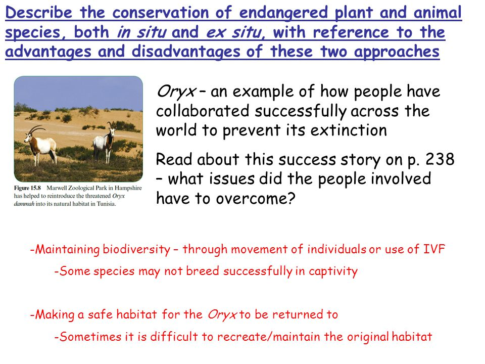 Describe the conservation of endangered plant and animal species, both in situ and ex situ, with reference to the advantages and disadvantages of these two approaches Oryx – an example of how people have collaborated successfully across the world to prevent its extinction Read about this success story on p.