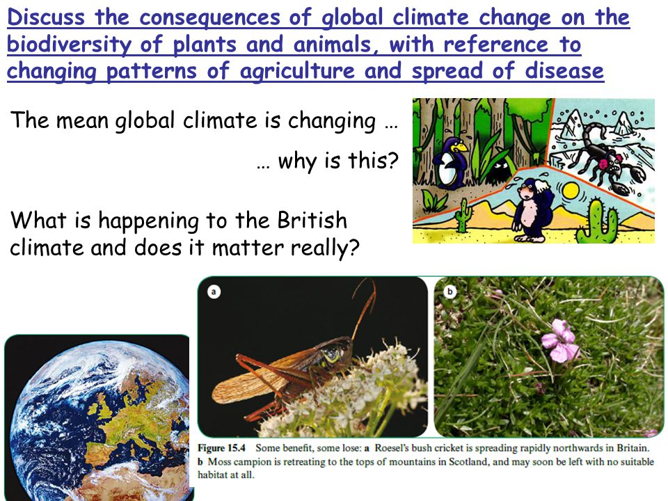 Discuss the consequences of global climate change on the biodiversity of plants and animals, with reference to changing patterns of agriculture and spread of disease The mean global climate is changing … … why is this.