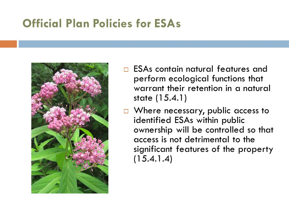 Official Plan Policies for ESAs  ESAs contain natural features and perform ecological functions that warrant their retention in a natural state (15.4.1)  Where necessary, public access to identified ESAs within public ownership will be controlled so that access is not detrimental to the significant features of the property (15.4.1.4)