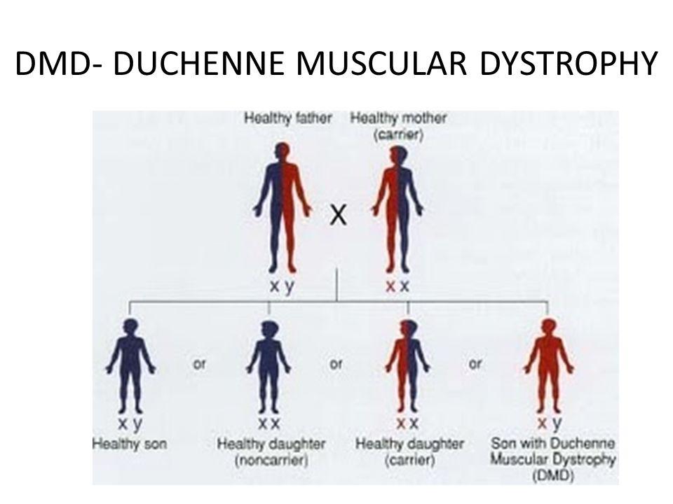 DMD- DUCHENNE MUSCULAR DYSTROPHY