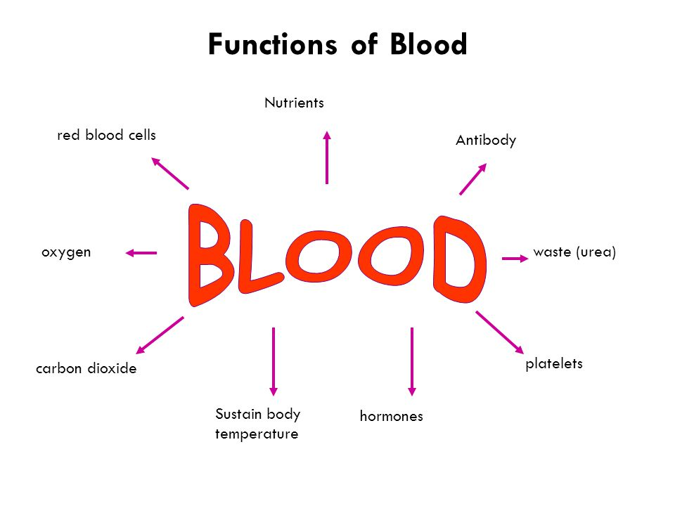 Functions of Blood red blood cells Antibody platelets Sustain body temperature carbon dioxide Nutrients waste (urea) hormones oxygen