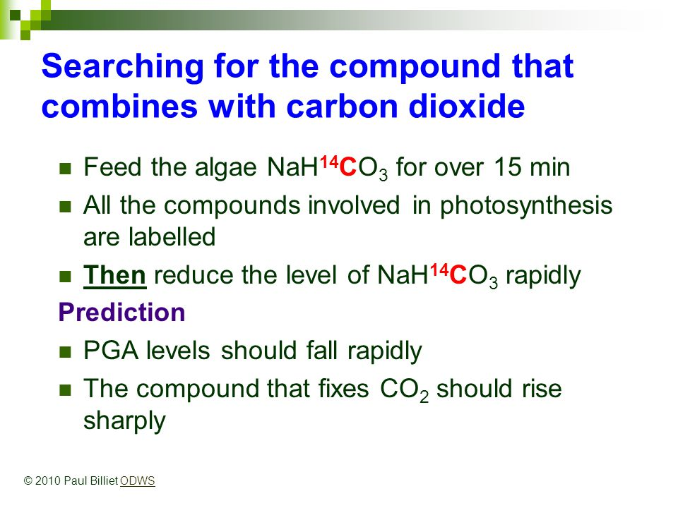 Searching for the compound that combines with carbon dioxide Feed the algae NaH 14 CO 3 for over 15 min All the compounds involved in photosynthesis are labelled Then reduce the level of NaH 14 CO 3 rapidly Prediction PGA levels should fall rapidly The compound that fixes CO 2 should rise sharply © 2010 Paul Billiet ODWSODWS