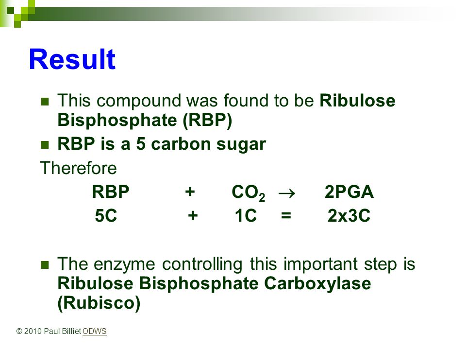 Result This compound was found to be Ribulose Bisphosphate (RBP) RBP is a 5 carbon sugar Therefore RBP + CO 2  2PGA 5C + 1C = 2x3C The enzyme controlling this important step is Ribulose Bisphosphate Carboxylase (Rubisco) © 2010 Paul Billiet ODWSODWS