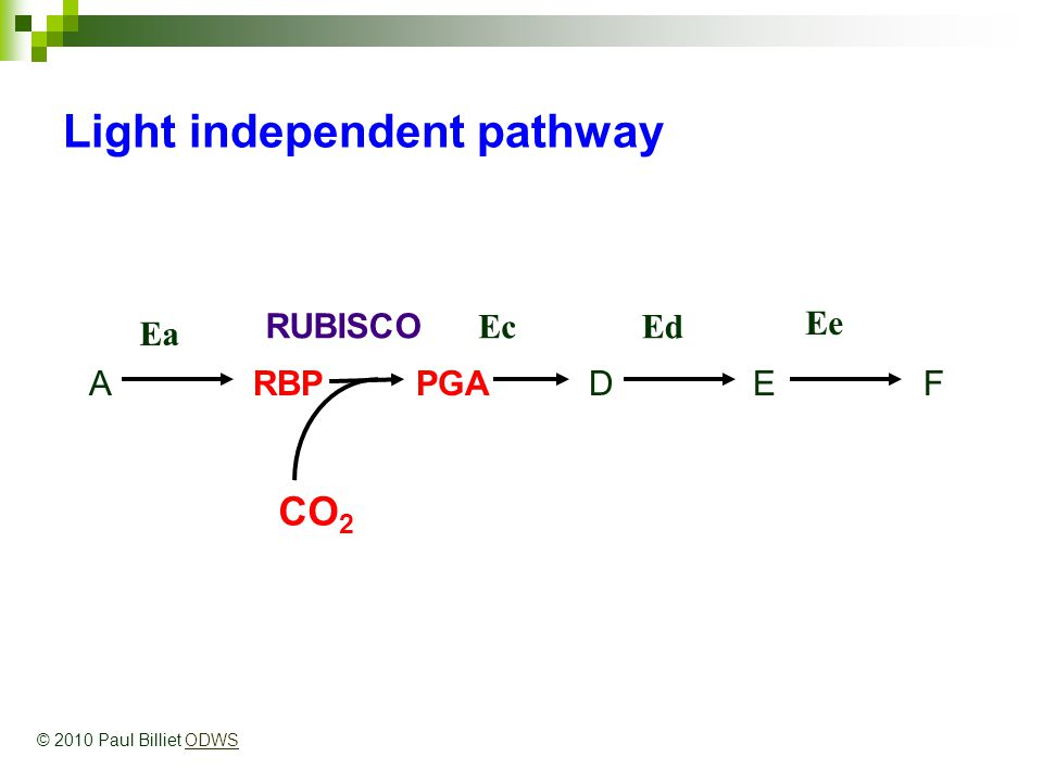 ARBPPGADEF Light independent pathway Ea RUBISCO EcEd Ee CO 2 © 2010 Paul Billiet ODWSODWS