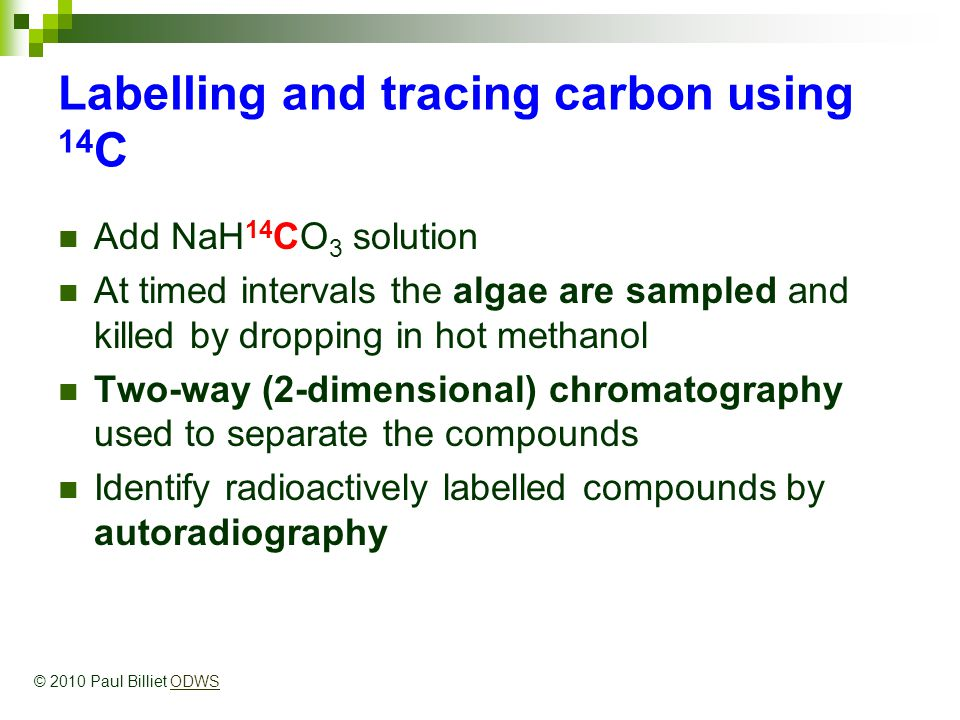 Labelling and tracing carbon using 14 C Add NaH 14 CO 3 solution At timed intervals the algae are sampled and killed by dropping in hot methanol Two-way (2-dimensional) chromatography used to separate the compounds Identify radioactively labelled compounds by autoradiography © 2010 Paul Billiet ODWSODWS