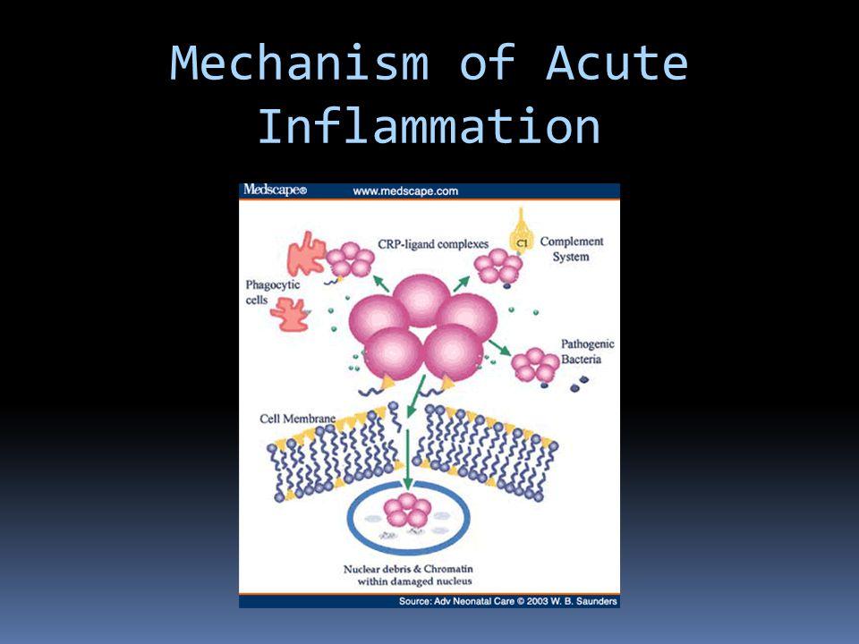 Mechanisms of Acute Inflammation 3. Repair