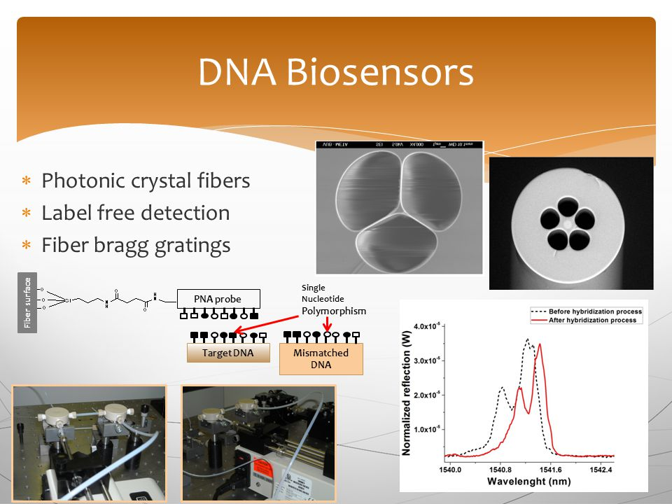  Photonic crystal fibers  Label free detection  Fiber bragg gratings DNA Biosensors Fiber s urface PNA probe Target DNAMismatched DNA Single Nucleotide Polymorphism
