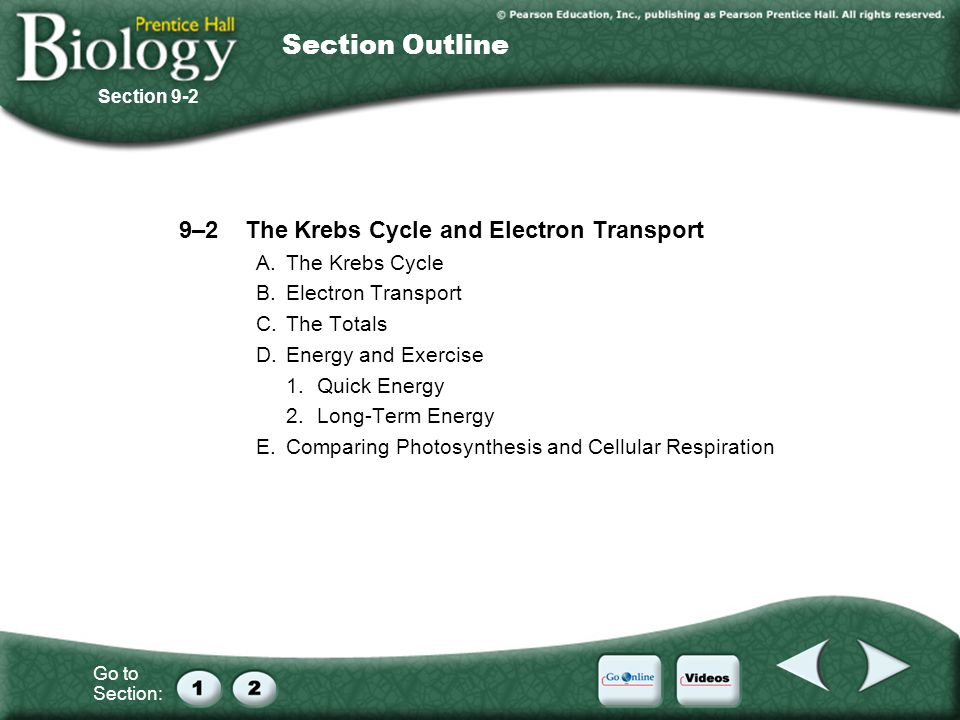 Go to Section: Section Outline 9–2The Krebs Cycle and Electron Transport A.The Krebs Cycle B.Electron Transport C.The Totals D.Energy and Exercise 1.Q