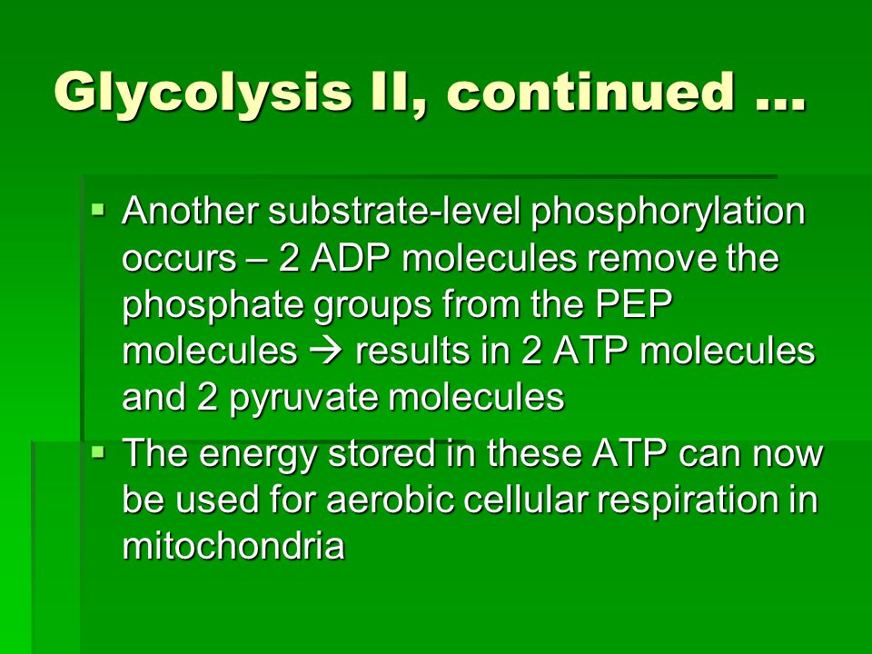 Glycolysis II, continued …  Another substrate-level phosphorylation occurs – 2 ADP molecules remove the phosphate groups from the PEP molecules  res
