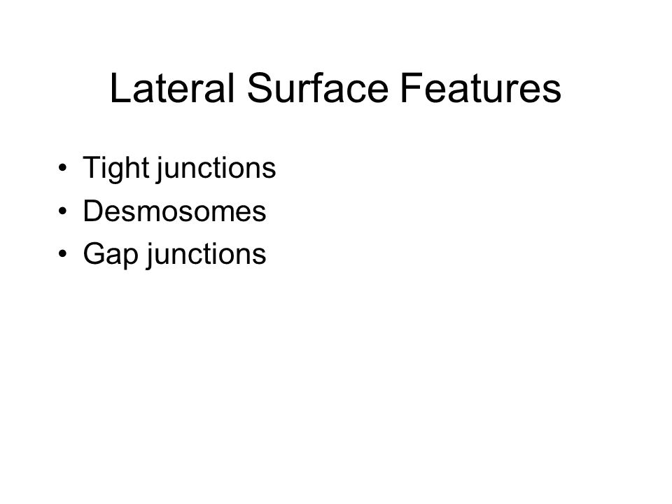 Lateral Surface Features Tight junctions Desmosomes Gap junctions
