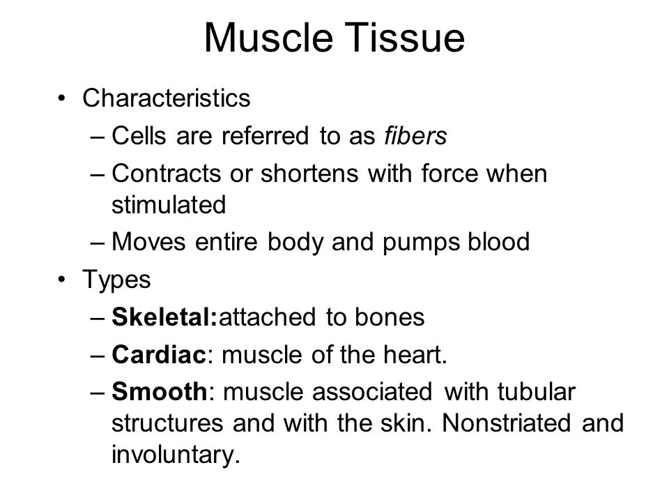 Muscle Tissue Characteristics –Cells are referred to as fibers –Contracts or shortens with force when stimulated –Moves entire body and pumps blood Ty