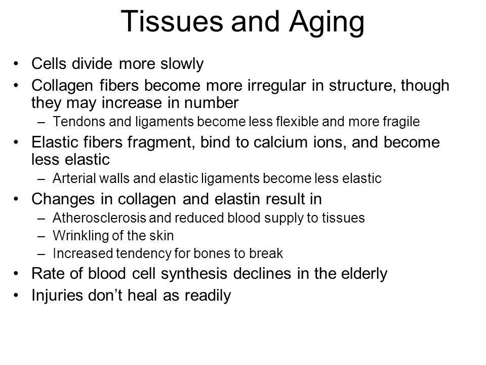 Tissues and Aging Cells divide more slowly Collagen fibers become more irregular in structure, though they may increase in number –Tendons and ligaments become less flexible and more fragile Elastic fibers fragment, bind to calcium ions, and become less elastic –Arterial walls and elastic ligaments become less elastic Changes in collagen and elastin result in –Atherosclerosis and reduced blood supply to tissues –Wrinkling of the skin –Increased tendency for bones to break Rate of blood cell synthesis declines in the elderly Injuries don't heal as readily