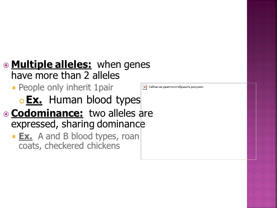  Multiple alleles: when genes have more than 2 alleles  People only inherit 1pair Ex. Human blood types  Codominance: two alleles are expressed, sh