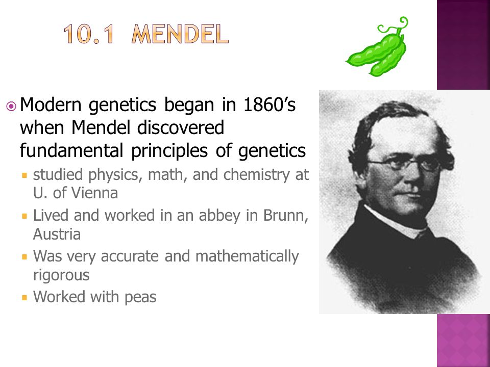  Modern genetics began in 1860's when Mendel discovered fundamental principles of genetics  studied physics, math, and chemistry at U. of Vienna  L