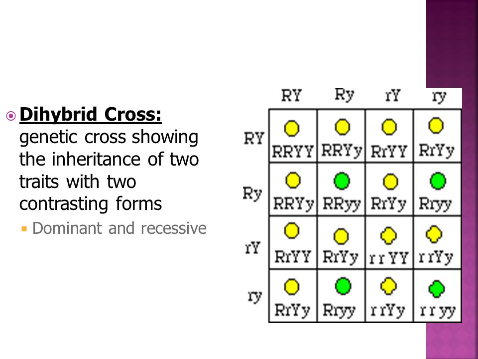 Dihybrid Cross: genetic cross showing the inheritance of two traits with two contrasting forms  Dominant and recessive