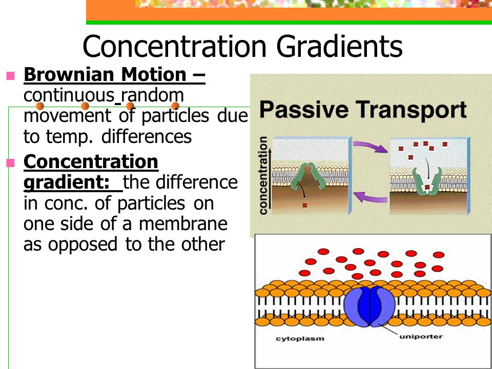 Concentration Gradients Brownian Motion – continuous random movement of particles due to temp. differences Concentration gradient: the difference in c