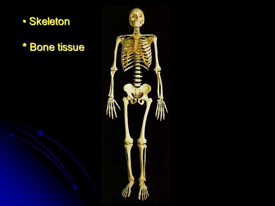 Skeleton * Bone tissue Skeleton * Bone tissue