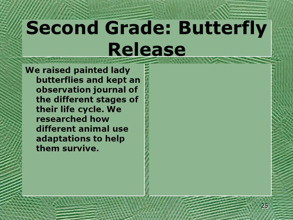 Second Grade: Butterfly Release We raised painted lady butterflies and kept an observation journal of the different stages of their life cycle. We res