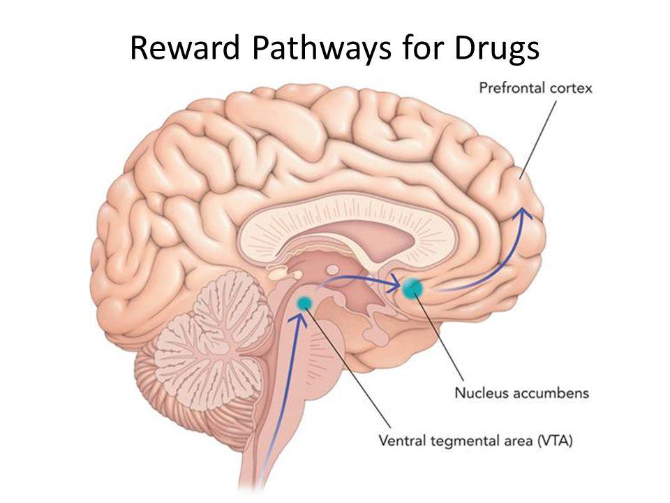 Reward Pathways for Drugs
