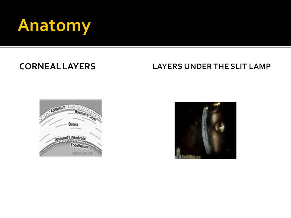 CORNEAL LAYERS LAYERS UNDER THE SLIT LAMP