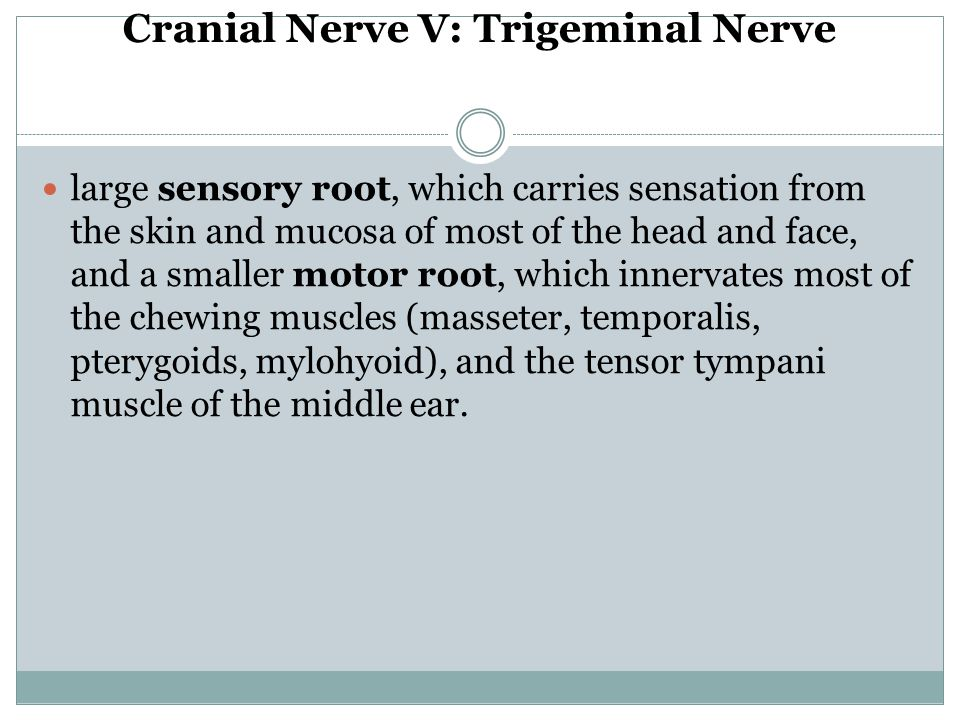 Cranial Nerve V: Trigeminal Nerve large sensory root, which carries sensation from the skin and mucosa of most of the head and face, and a smaller mot